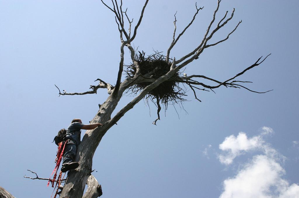 Fish and wildlife service climber kansas a climber for Kansas fish and wildlife
