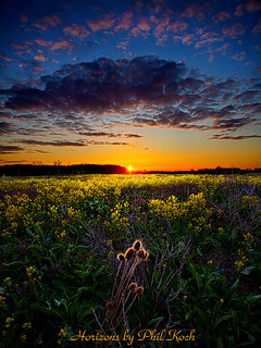 Remnants | by Phil~Koch