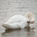 Swan 53932