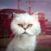 Glass Door Cat
