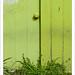 Door Knob, Green Wall, and Grass