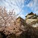 Osaka Castle at Spring