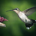 Hummingbird by Lopshire