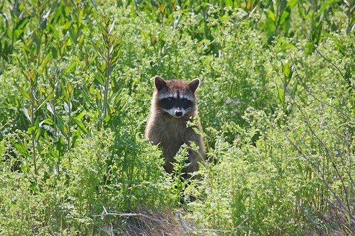 1coon dave harper oakley | by Contra Costa Times