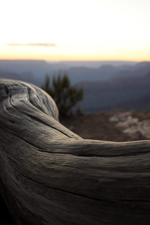 Grand Canyon - Tree root | by Cédric Darrigrand