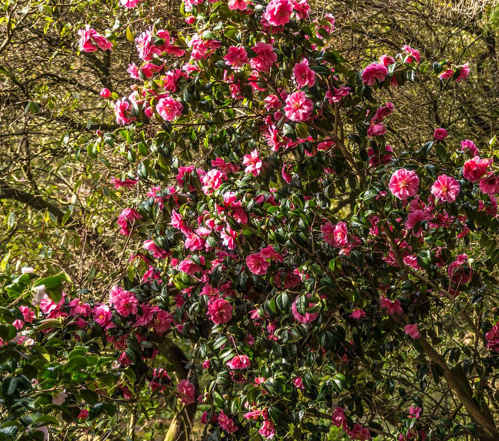 Botanic Gardens In Glasnevin (Dublin) | The National Botanic… | Flickr
