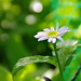 2012G.W. flower tour my garden 01