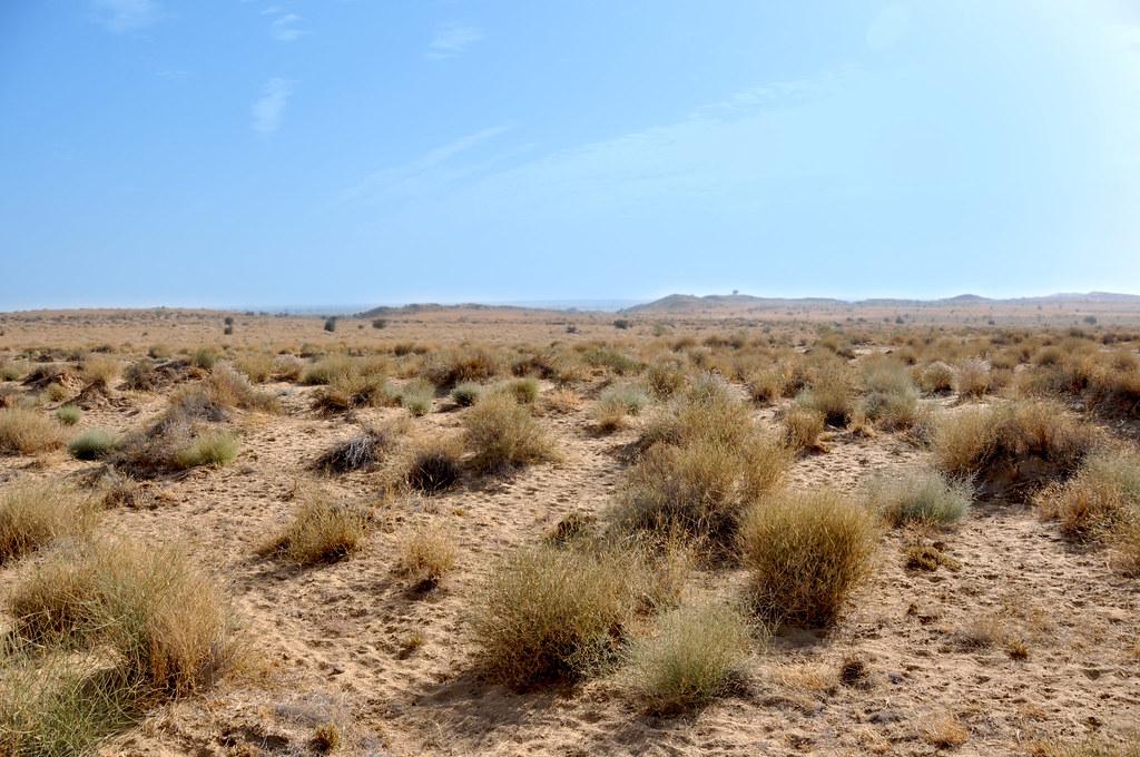 Thar Desert Plants