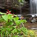 Wake Robin Falls