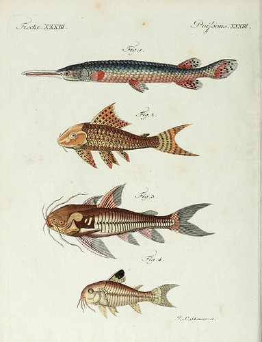 n85_w1150 | by BioDivLibrary