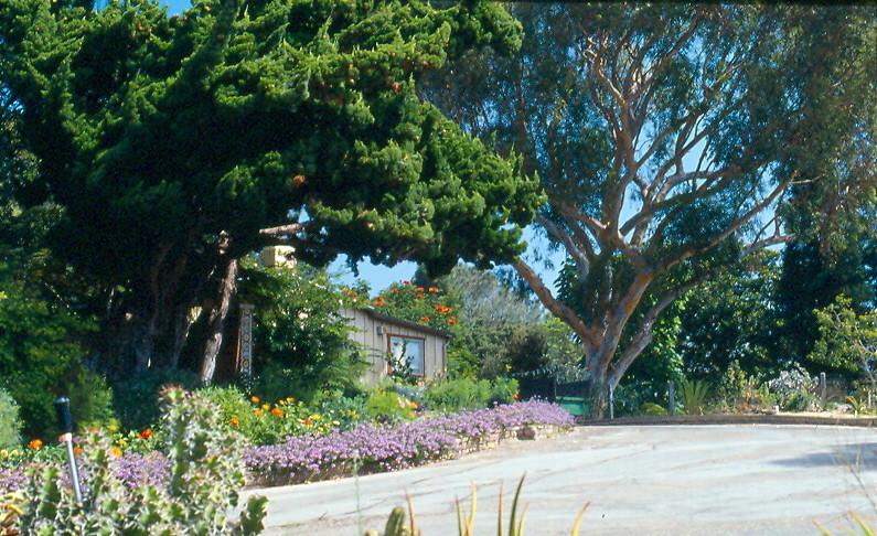 Quail Botanical Gardens Encinitas Cal 14 September 19
