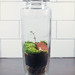 Tall Duck Terrarium