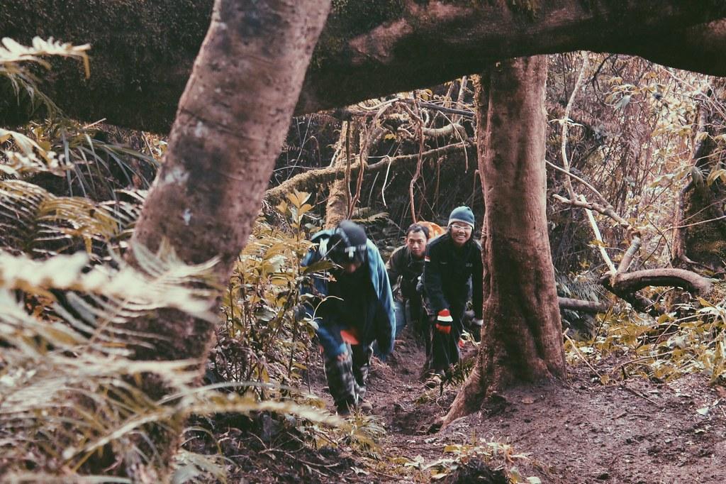 Menuju Puncak Pangrango