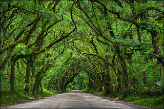 Botany Bay Road | by IgorLaptev