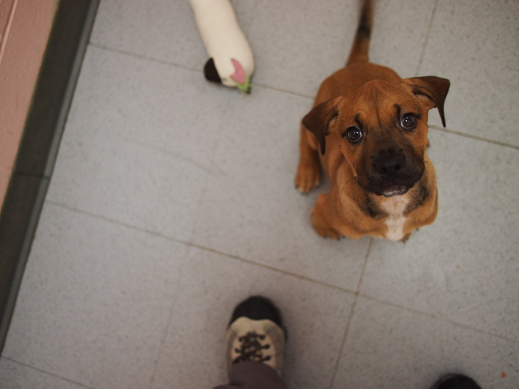 Adoptables  East CAN
