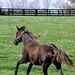 Frisky Young Horse, Kentucky