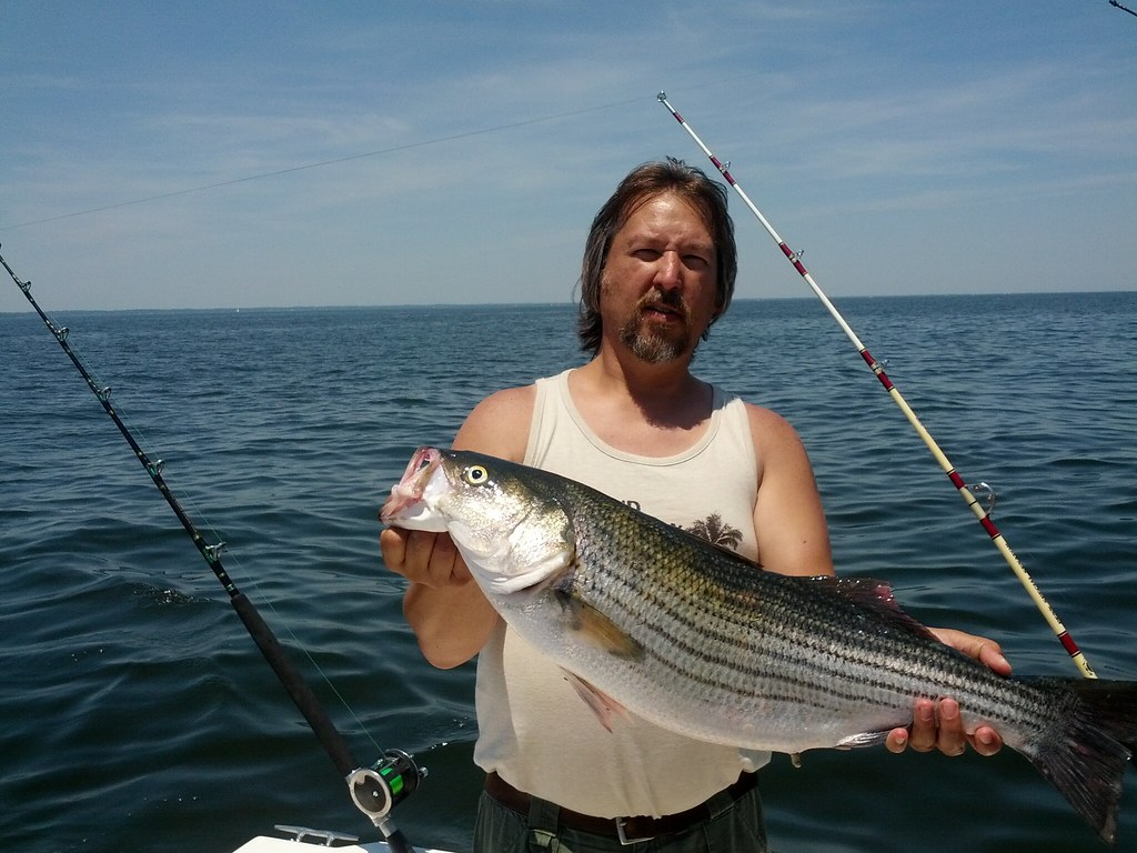 Striped bass courtesy of tim schilling maryland for Md dnr fishing report