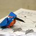 Kingfisher diagram