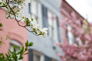 Row House Lovelies | by available_photons