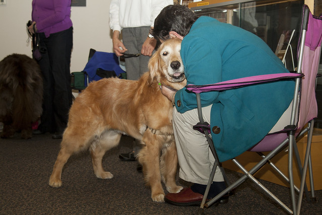 2012 Dogs LIbrary_1160