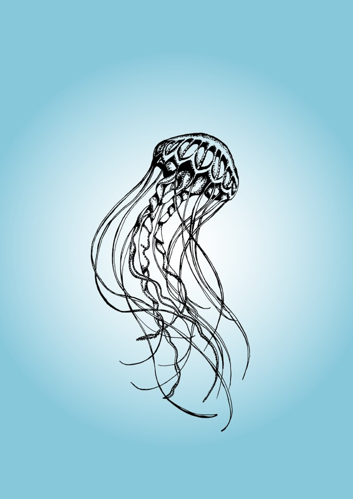 Jellyfish Drawing Color Jellyfish Drawing Flickr