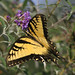 yellow butterflyf 8-21-10