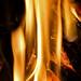 fire flower {explored}