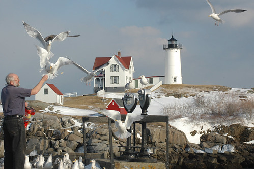 nubble  gulls_ | by cahill2007