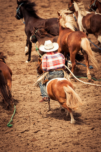 Tiny Horses | by Calgary Stampede