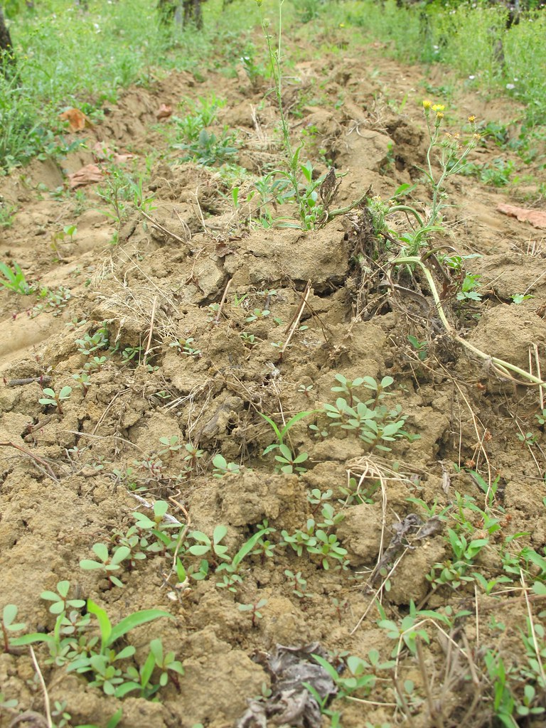 Red clay soil these red clay soils support the old vine for Soil support
