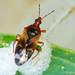 Percevejo // Minute Pirate Bug (Anthocoris visci)