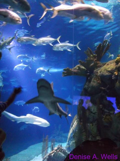 Shark Tunnel Omaha Ne Zoo Denise A Wells Flickr