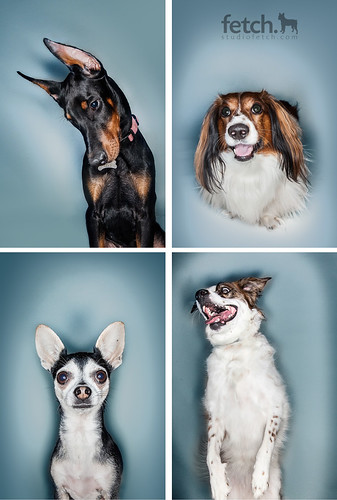 Ringflash dogs | by studiofetch