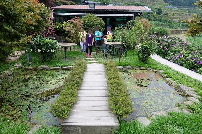 8 陽明山 繡球花 大梯田 竹子湖