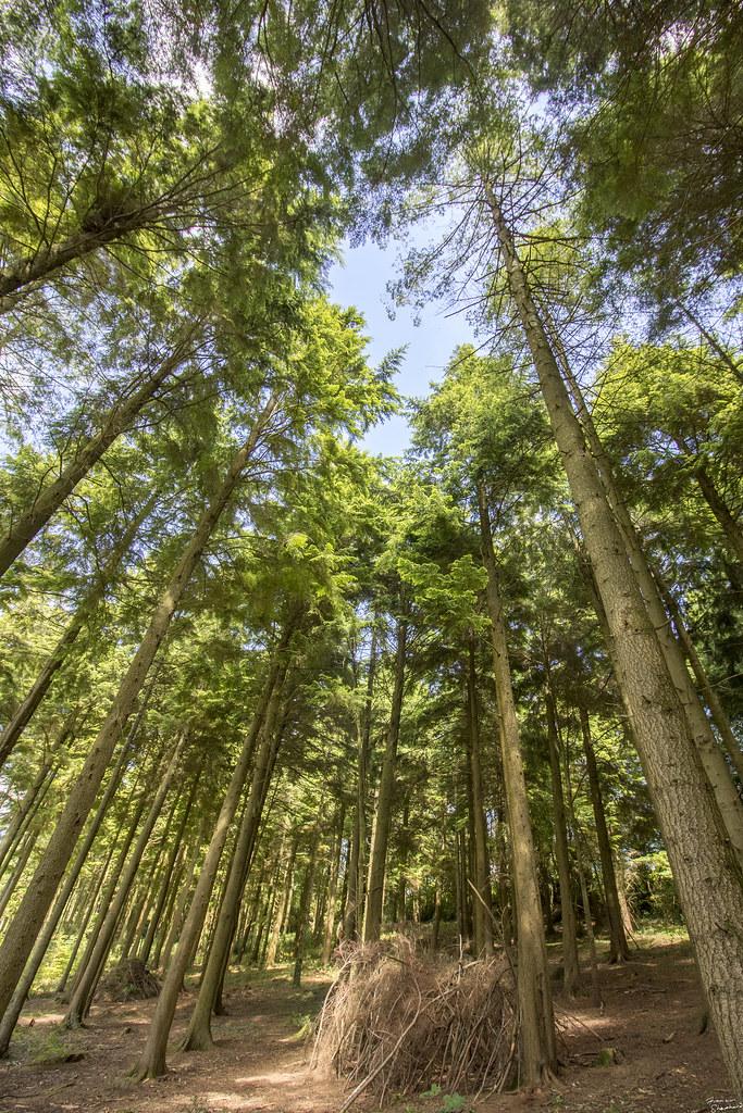 Idless Wood