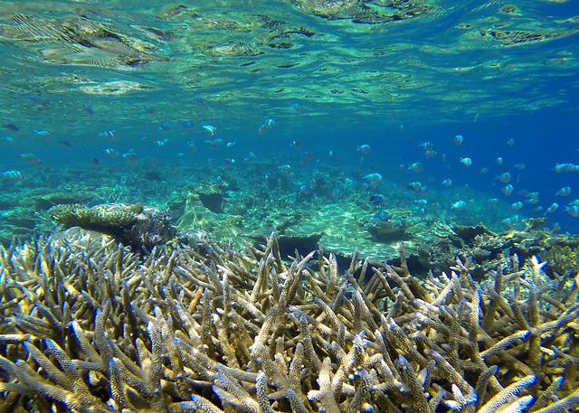 Espectaculares fondos marinos llenos de corales en la isla de Odagalla