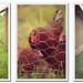 rasberryblog5