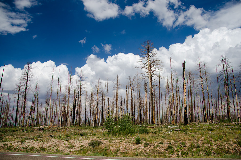 Põlenud mets