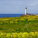 Springtime at Pigeon Point Lighthouse