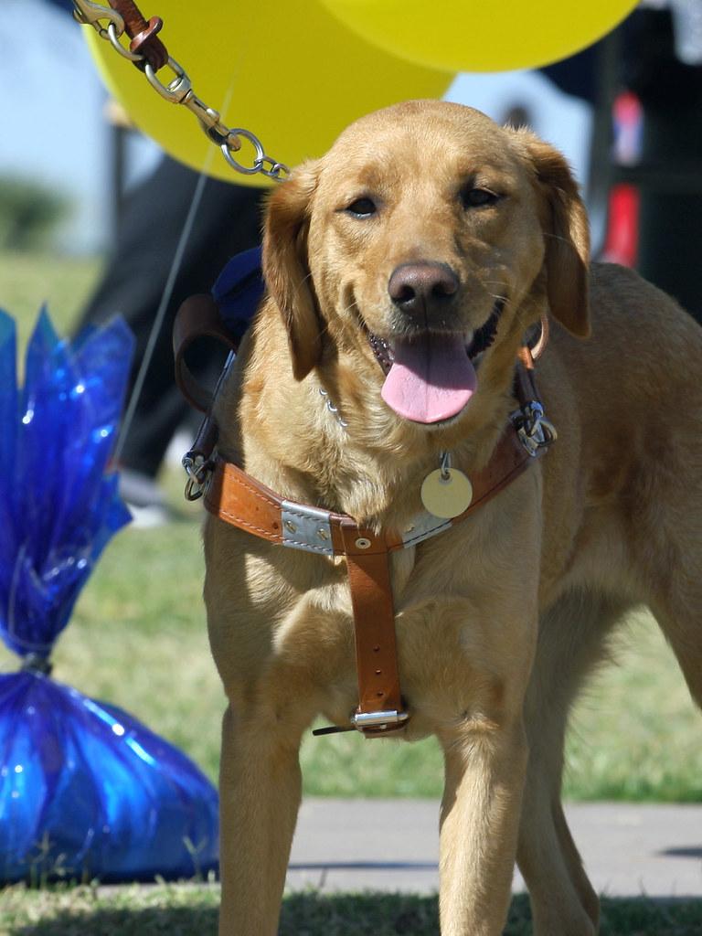 Smiling Dog Training Ct