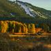 Fall colours at South Lake Tahoe