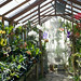 My warm greenhouse