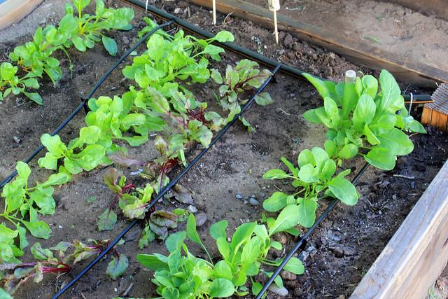 Diy Irrigation System Flickr Photo Sharing