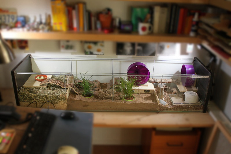 Detolf cage made from ikea detolf glass cabinet until for Ikea hamster cage