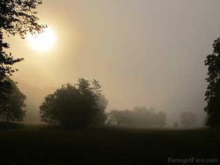 Misty farm morning (1) | by Farmgirl Susan