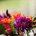 A Friendly Bouquet