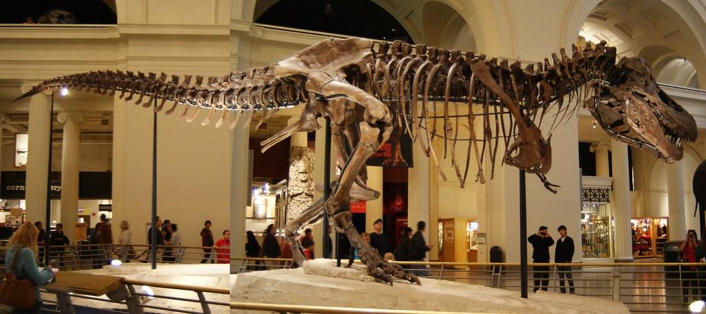Sue Tyrannosaurus Rex At The Field Museum Chicago Il