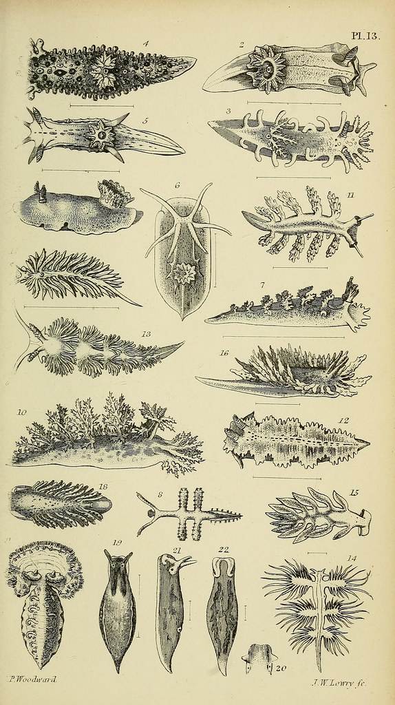 N578 w1150 a manual of the mollusca london virtue for Botanical tattoo london