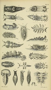 n578_w1150 | by BioDivLibrary