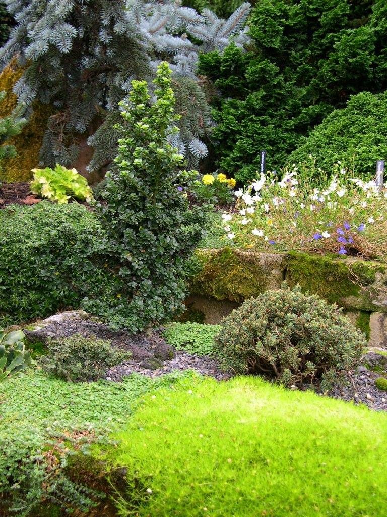 Dwarf Evergreens And Irish Moss Irish Moss Lends A